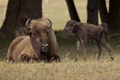 Moeder en kalf. Foto: Ruud Maaskant