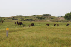 Bison at the Bison Trail. Photo: Esther Rodriguez