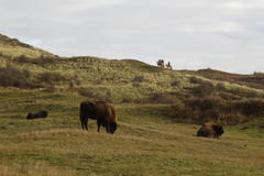 Excursion on horseback in dune area Kraansvlak. Photo: Louise Prevot