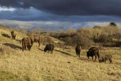 Wisentgroep in het Kraansvlak. Foto: Ruud Maaskant