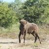 Bison release. Photo: Leo Linnartz