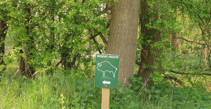 Infosign Bison Trail. Photo: Leo Linnartz