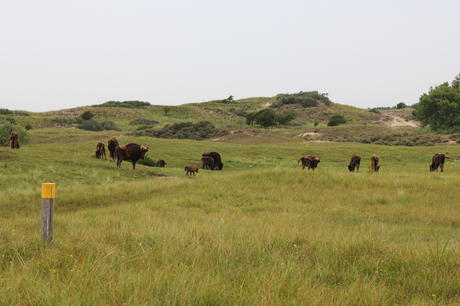 Bison on Bison Trail. Photo: Esther Rodriguez