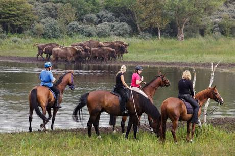 Equestrians with bison in the background. Photo: Ruud Maaskant