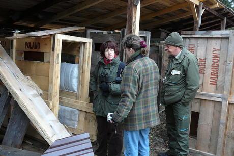 Preparations transport bison from Bialowieza. Photo: Leo Linnartz