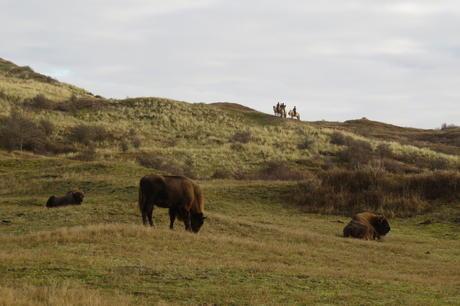 Excursion on horseback in dune area Kraansvlak. Photo: Louise Prevot