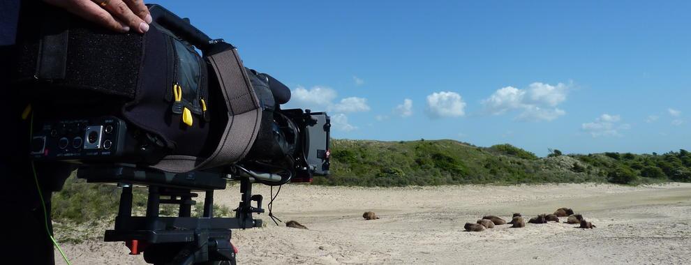 The recording of bison for TV Buitengewoon in the Kraansvlak dune area. Photo: Twan Teunissen