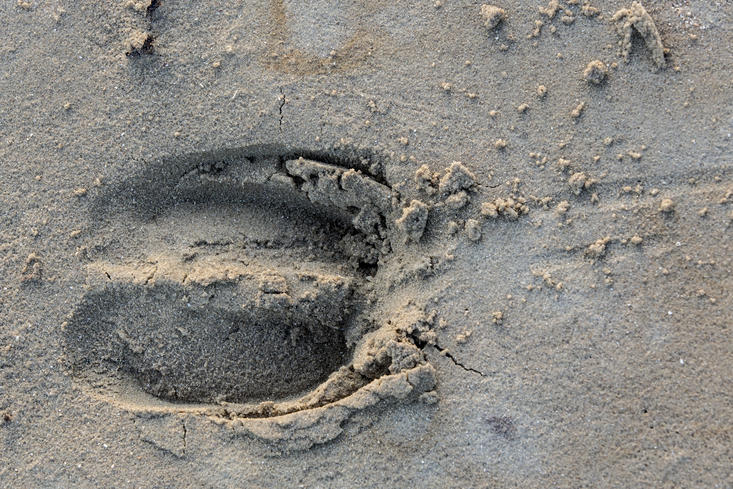 Bison track in the sand. Photo: Ruud Maaskant